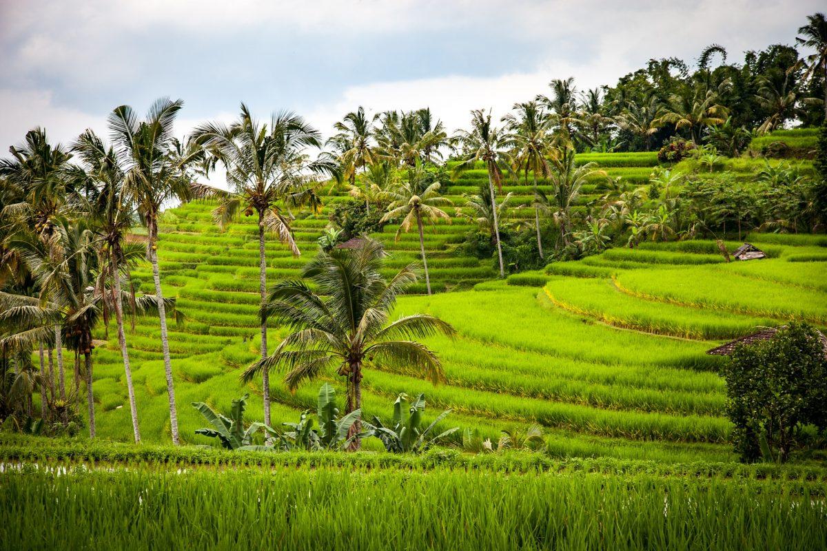 Handelsabkommen mit Indonesien: Eine Chance für Schweizer KMU