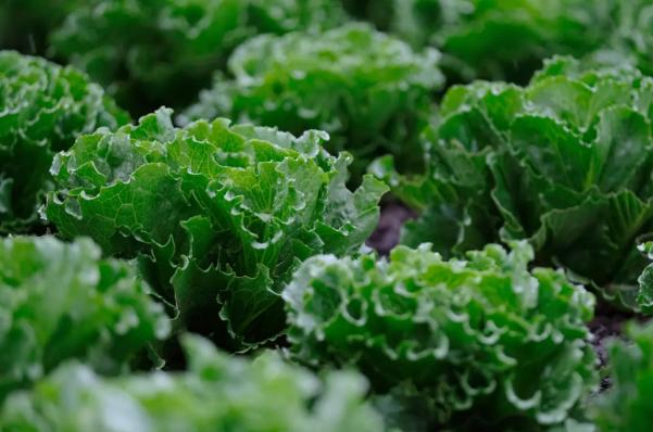 Statt Fleisch landet vermehrt Gemüse auf den Tellern – die Anbieter von Saatgut freut's